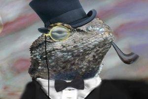 Lizard Stress its hacke user database!