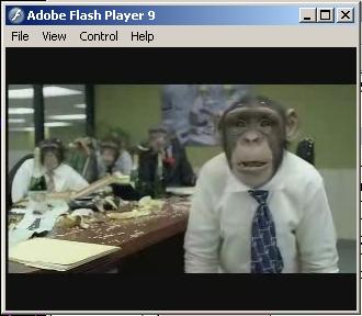 CozyDuke-Office-Monkeys-LOL-Video